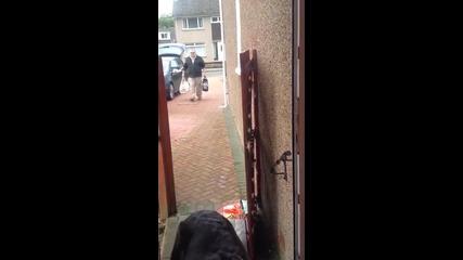 Куче носи пазарските чанти към къщи