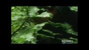 Ultimate Survival / Оцеляване на предела с Bear Grylls, Сезон 1, Еп. 4, Alaskan Mountain Range [1]