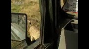 Africa safari leads conservationists to cheetah and cubs - Bbc wildlife