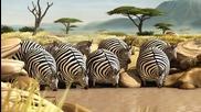 Какво щеше да стане ако животните бяха кръгли - Зебри
