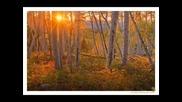 Группа Белые Крылья- В Лесу Осеннем