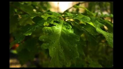 Дъждовни капки - Бетховен
