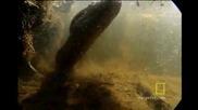 Огромна анаконда