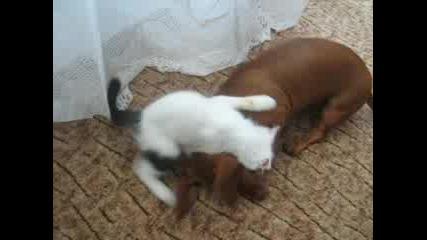 Куче И Котка Приятели