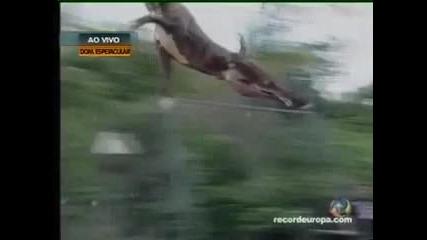 скок ...изумително