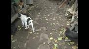 Бивше Куче На Държавна Сигурност Се Самозадоволява с Крак