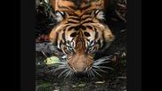 Класика ! .. Survivor - Eye of the Tiger + Превод