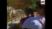 Хора от зоопарк спасяват живота на туристка от зъбите на полярна мечка !