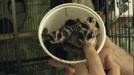 Колко Животинки Се Събират В Кутийка От Сметана