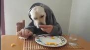 Това Куче Ще Ви Побърка От Смях!