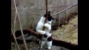 Котка Танцува На Пилона
