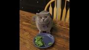 Котката изяде закуската , вижте нейната реакция , когато стопанина извика нейното име !