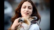 Лисица спасена и отгледана от хора