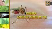 Какво не знаем за комарите