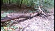 Паднали дървета из алеите в Борисова градина
