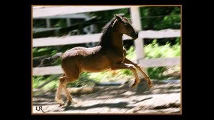 Андалуски коне