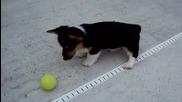 Сладур си играе с тенис топка