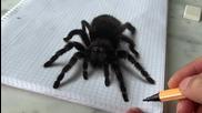 Страхотна реалистична рисунка на паяк