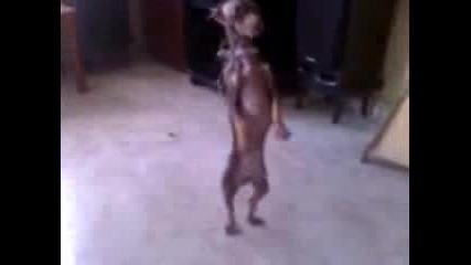 най - побърканото куче..мръсни танци ;)