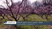 Огромни цветни полета покриха Гърция с настъпването на пролетта