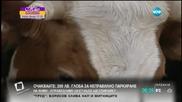Животновъди блокират границата с Турция