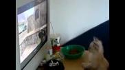 Коте - зарибен маняк на Cs