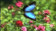 Вълшебна пан флейта - Пеперуди