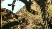 Hawk срещу змия - Ббс - дивата природа