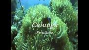 Calunga - Petulante