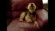 Сладко Кученце Си Пее