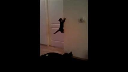 Spider - котка