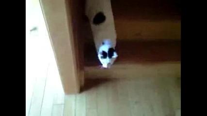 Мързеливо Коте Слиза По Стълбите ! Смях