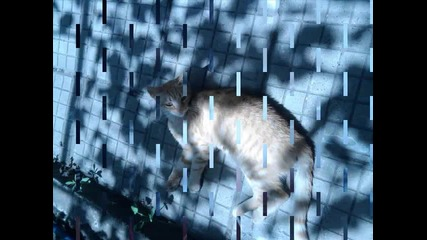 Bubi_to and nasko_nakata4-нашите влюбени котенца