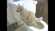 Как Котка Ползва Тоалетната