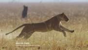 Ден на лъва - маратон