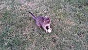 Игривата ми котка