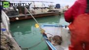 What A Catch! Italian Fishermen Net Waterlogged Deer 1 Mile From Shore