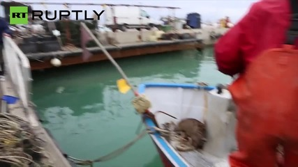 What A Catch! Italian Fishermen Net Waterlogged Deer 1 Mile From Shore