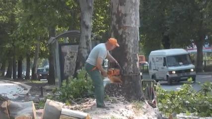 Дърво спука водопровод в Пловдив, отсякоха го