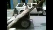 Инцидент - магаре виси в въздуха - - луд смях!!!!