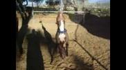 Pit Bull Виси 4