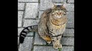 Любопитни Факти За Котките