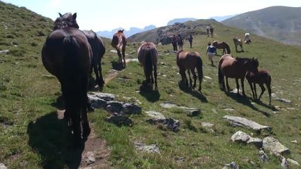 Разходка между стадо коне в Рила
