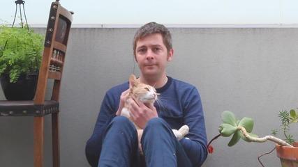 Човек изгражда картонен замък на своя домашен любимец - котката ..