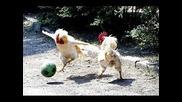 смях техно парче техно кокошки