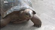 Най - големине костенурки на земята