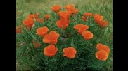 Валсът На Цветята - Релакс