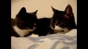 Котки, Който Наистина Говорят