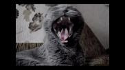 Хеви Метъл котета