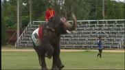 Слонове и студенти разиграха световното, стигнаха до 3:3